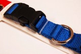 nylon dog collar large royal blue