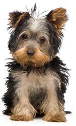 dog-pet-products.jpg